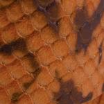 Maculato arancione