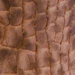 Maculato marrone chiaro