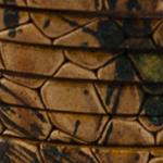 6fili Rettile marrone